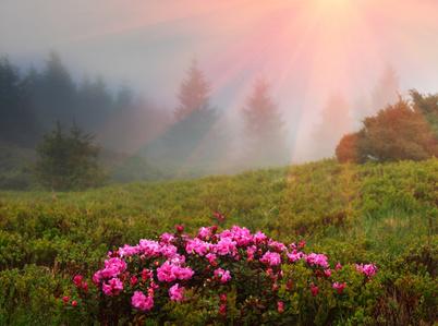 Rhododendron Standort, Klima